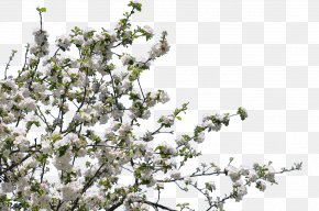Tree - Blossom Twig Tree Forest Gardening Flower PNG