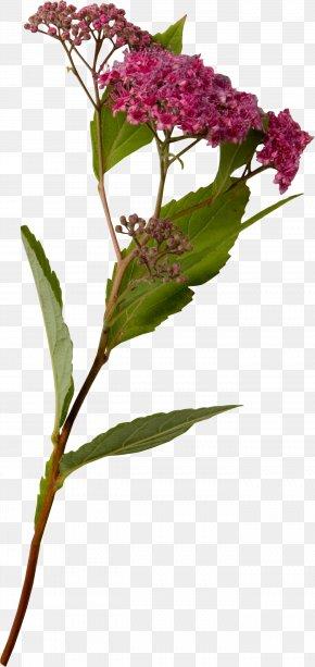 Creative Floral Design - Flower Floral Design Drawing Garland PNG
