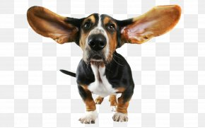 Funny Dog Transparent Clipart - Basset Hound Beagle Bloodhound Papillon Dog Chihuahua PNG