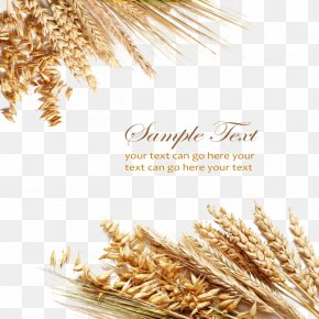 Textured Wheat Elements - Wheat Berry Cereal Grain Ear PNG