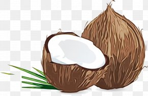 Coconut Water Plant - Coconut Tree Cartoon PNG