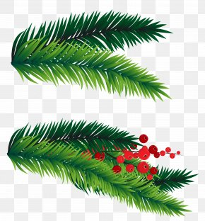 Pine Branches Decoration Picture - Fir Christmas Tree Clip Art PNG