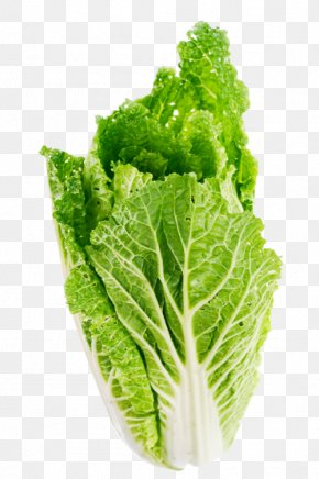 Vegetable Cabbage - Celtuce Butterhead Lettuce Leaf Vegetable PNG