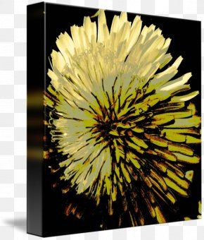 Dandelion - Dandelion Stock Photography Sunflower M Chrysanthemum PNG