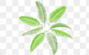 Green Coconut - Leaf Arecaceae Palm Branch Illustration PNG