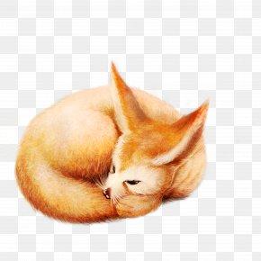 Sleeping Fox - Fox Diego De La Vega Whiskers Kitten PNG