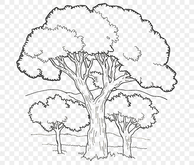 - Coloring Book Colouring Pages Fruit Tree Child, PNG, 695x698px, Coloring  Book, Adult, Area, Art, Artwork Download