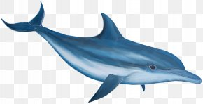 Dolphin Image - Common Bottlenose Dolphin Clip Art PNG