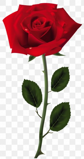 Red Rose Art Picture - Rose Clip Art PNG
