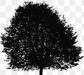 Lush Tree Top - Tree Silhouette Deciduous Clip Art PNG