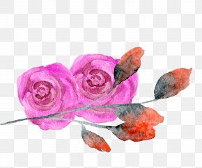 Rose Red Flower Watercolor - Garden Roses Creative Watercolor Transparent Watercolor Watercolor Painting PNG
