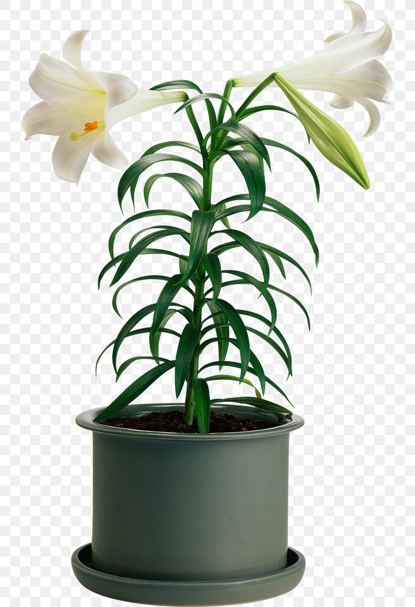 Flowerpot Houseplant Cut Flowers, PNG, 733x1200px, Flower, Cut Flowers, Flowering Plant, Flowerpot, Houseplant Download Free