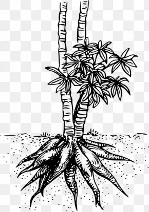 Arecales Herbaceous Plant - Palm Tree Drawing PNG