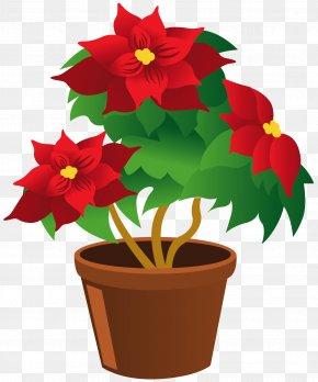 Poinsettia Pot Clipart - Plant Thumbnail Clip Art PNG