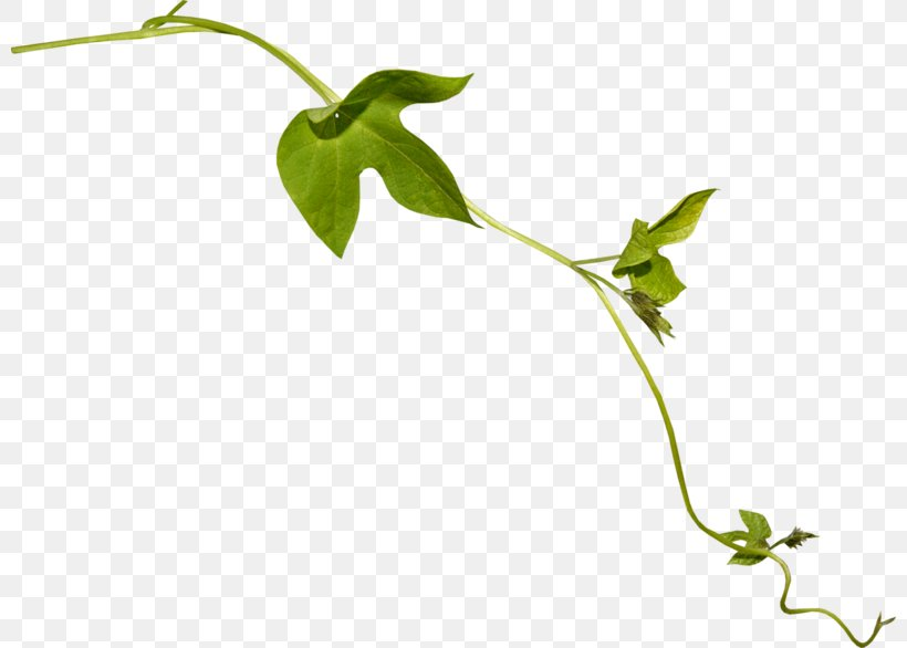 Twig Leaf Plant Stem Flower Vine, PNG, 800x586px, Twig, Branch, Flora, Flower, Herb Download Free