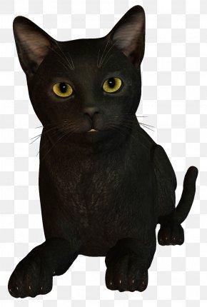 Witch Cat - Bombay Cat Burmese Cat Korat Black Cat PNG