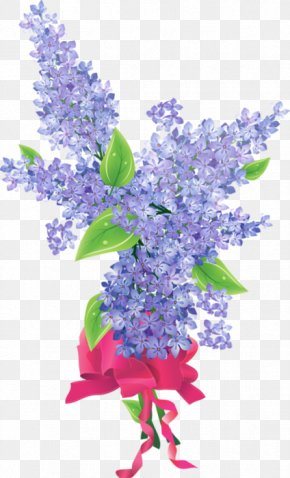 Flower - Common Lilac Flower PNG