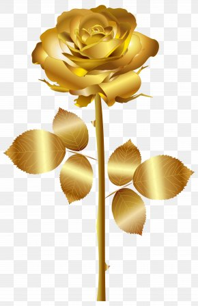 Gold Rose Clip Art Image - Rose Gold Yellow Clip Art PNG