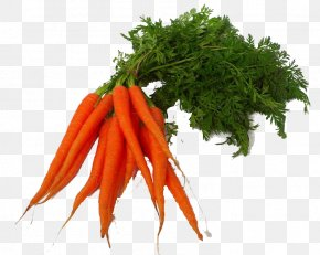 Carrot Clipart - Carrot Juice Carrot Juice Vegetable PNG