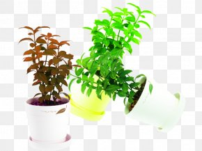 Mint Plant In Kind - Plant Mint Flowerpot Download PNG