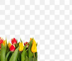 Tulips - Wedding Invitation Indira Gandhi Memorial Tulip Garden Flower PNG
