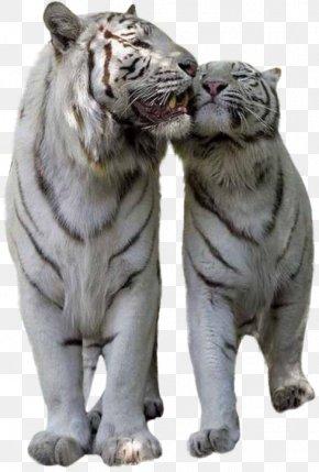 Tiger - Tiger Lion Cat Felidae Bird PNG