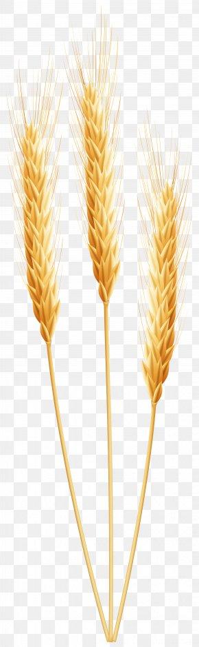 Wheat Clip Art Image - Emmer Cereal Germ PNG