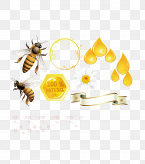 Honey Bee Hive Template Download - Honey Bee Beehive PNG