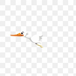 Albatross - Beak Duck Bird Cygnini Goose PNG