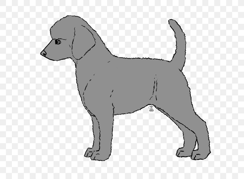 Labrador Retriever Puppy Dog Breed