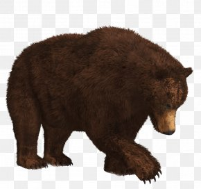 Bear 9 - Brown Bear Polar Bear PNG