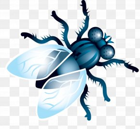 Fly Image - Fly Clip Art PNG