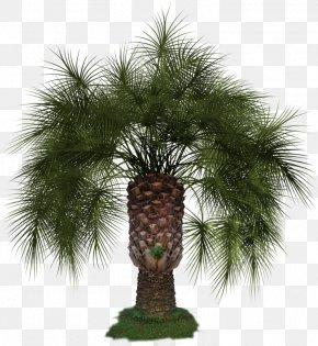 Arecaceae Asian Palmyra Palm Clip Art PNG