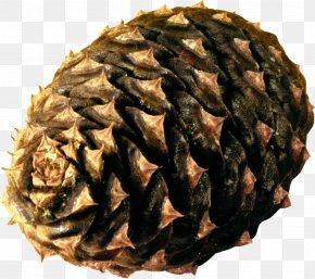 Pine Cone - Tea Wagashi No Ha PNG