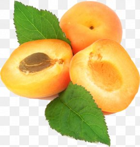 Apricot - Apricot Kernel Apricot Oil Fruit PNG
