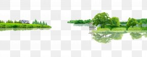 Forest - Tree Forest Download PNG