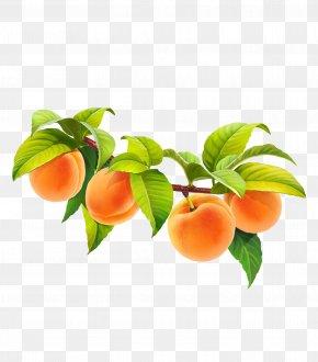 Dates Fruit tree - Apricot Fruit Peach Juice PNG