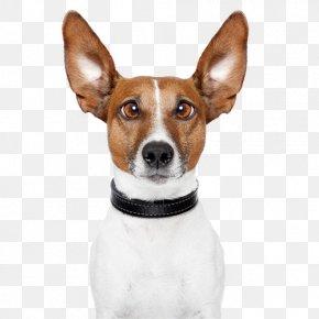 Cute Dog - Dog Walking Stock Photography Pet Dog Daycare PNG
