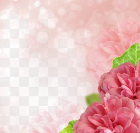 Pink Hibiscus Edge - Rose Stock Photography Microsoft PowerPoint Flower PNG