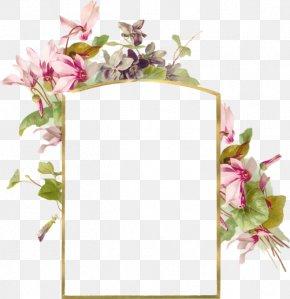 Flowers - Wallpaper PNG