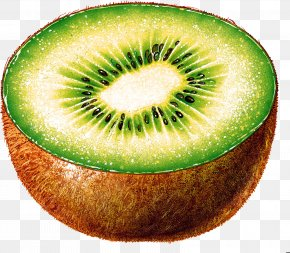 Kiwi Image, Free Fruit Kiwi Pictures Download - New Zealand Kiwifruit Color PNG