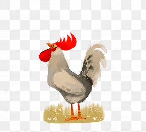 Cock - Chicken Rooster Poster Illustration PNG