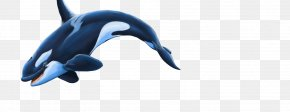 Dolphin - Dolphin Killer Whale PNG