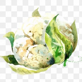 Drawing Small Fresh Green Vegetables Cauliflower - Vegetable Watercolor Painting Drawing Illustration PNG
