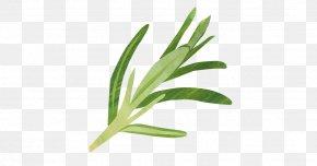 Leaf - Leaf Herbalism Grasses Plant Stem PNG