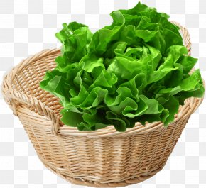 Vegetable - Romaine Lettuce Leaf Vegetable Organic Food Spring Greens PNG