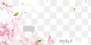 Pink Peach Blossom Background - Pink Petal Flower PNG