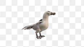 Albatross HD - Duck Goose Beak Feather Fauna PNG