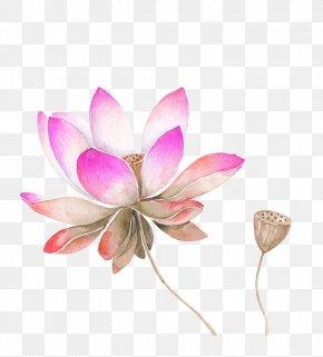 Pink Watercolor Lotus Flower Decorated Pattern - Nelumbo Nucifera Watercolor Painting Drawing Flower Sketch PNG