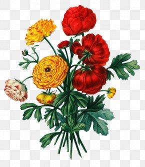 Flower - Floral Design Flower Bouquet Botany Clip Art PNG